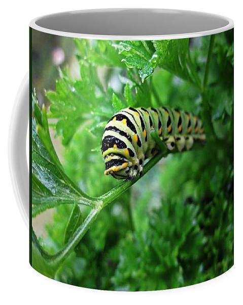 Swallowtail Caterpillar Coffee Mug featuring the photograph Swallowtail Caterpillar by MTBobbins Photography
