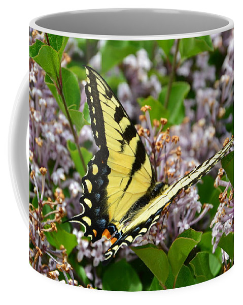 Coffee Mug featuring the photograph Swallowtail On Lilacs by Katerina Naumenko