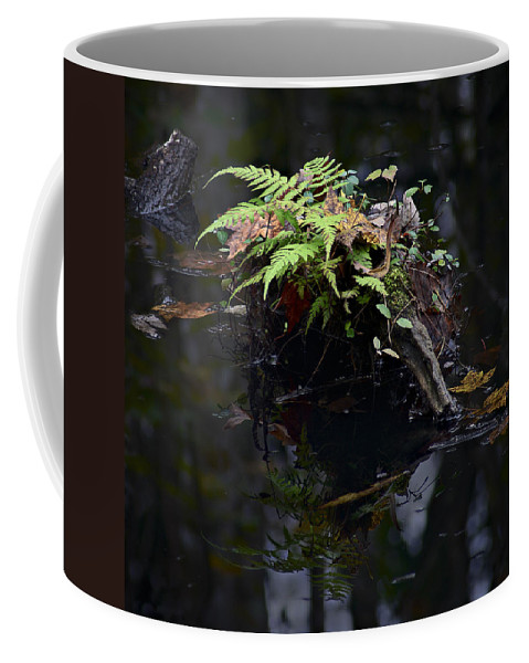 Florida Coffee Mug featuring the photograph Swamp Fern by Bill Chambers