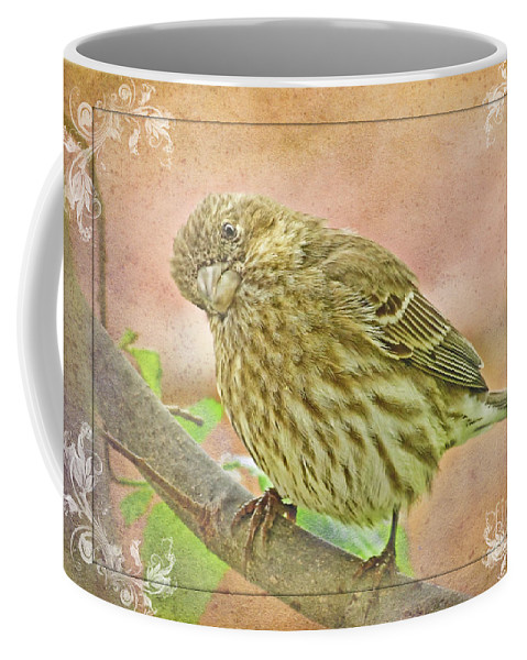 Nature Coffee Mug featuring the photograph Sweet Pose Female Housefinch by Debbie Portwood