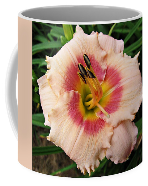 Daylily Coffee Mug featuring the photograph Sweet Sugar Candy Daylily by MTBobbins Photography