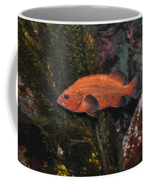 Newport Coffee Mug featuring the photograph Swimming by Image Takers Photography LLC - Laura Morgan