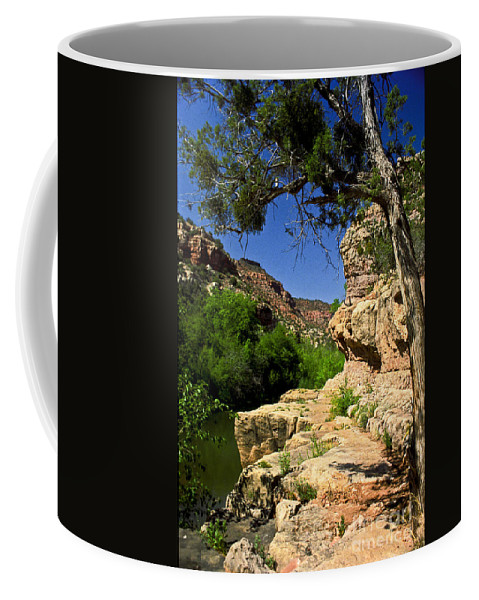 Arizona Coffee Mug featuring the photograph Sycamore Canyon by Kathy McClure
