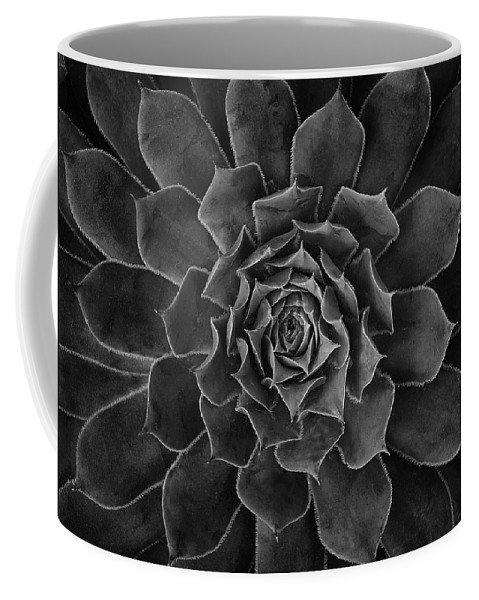 Succulent Coffee Mug featuring the photograph Symmetrical Succulent by Robert Woodward