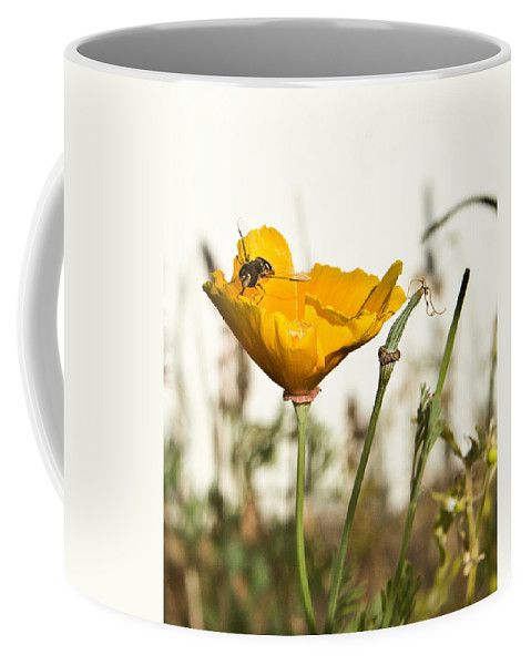 Syrphid Coffee Mug featuring the photograph Syrphid Fly And Poppy 2 by Douglas Barnett
