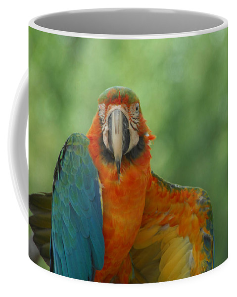 Parrot Coffee Mug featuring the photograph Ta Da by Donna Blackhall
