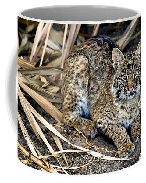 Big Bob Cat Coffee Mug featuring the photograph Take The Picture And Move On by Davids Digits