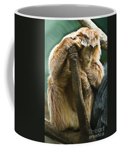 Ape Coffee Mug featuring the photograph Taking A Nap by Anthony Sacco