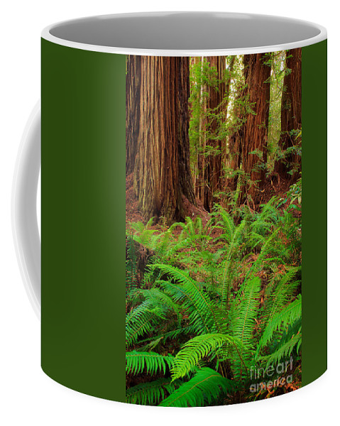 America Coffee Mug featuring the photograph Tall Trees Grove by Inge Johnsson