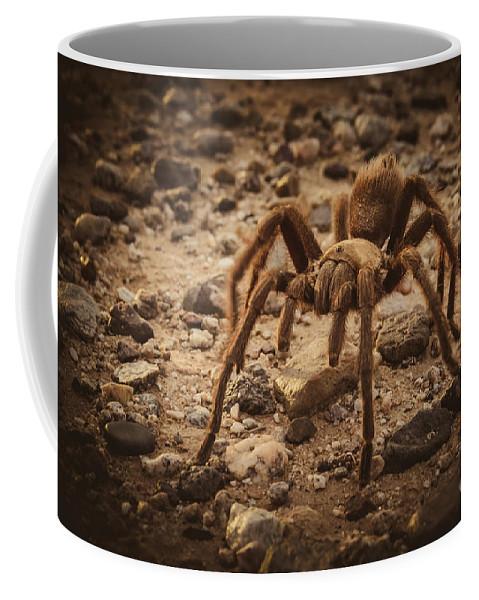 Aphonopelma Hentzi Coffee Mug featuring the photograph Tarantula by Robert Bales