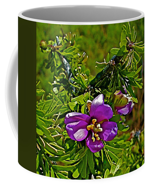 Tarbush In Chihuahuan Desert Of Big Bend National Park Coffee Mug featuring the photograph Tarbush In Chihuahuan Desert Of Big Bend National Park-texas  by Ruth Hager