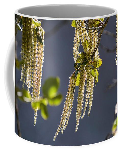 Trees Coffee Mug featuring the photograph Tassels In The Breeze by Anita Cumbra