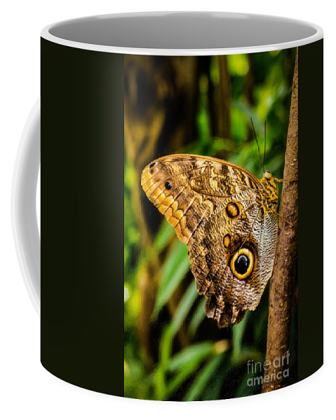 Butterflies Coffee Mug featuring the photograph Tawny Owl Butterfly by Jon Burch Photography