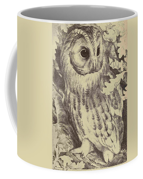 Tawny Coffee Mug featuring the drawing Tawny Owl by Unknown