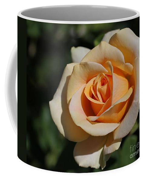 Rose Coffee Mug featuring the photograph Tea Rose by Emma England