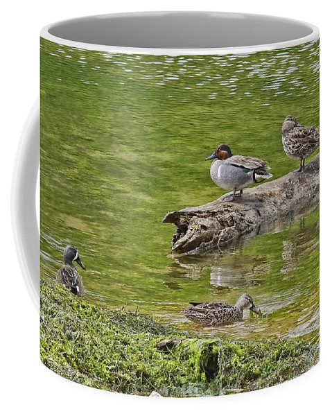 Blue-winged Teal Coffee Mug featuring the photograph Teal Family Gathering by Gary Holmes