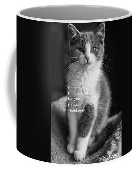 Katmai Kitty Coffee Mug featuring the photograph Thanksgiving Kitty Bw by Joan Wallner