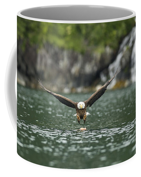 Eagle Coffee Mug featuring the photograph The Approach by Ted Raynor