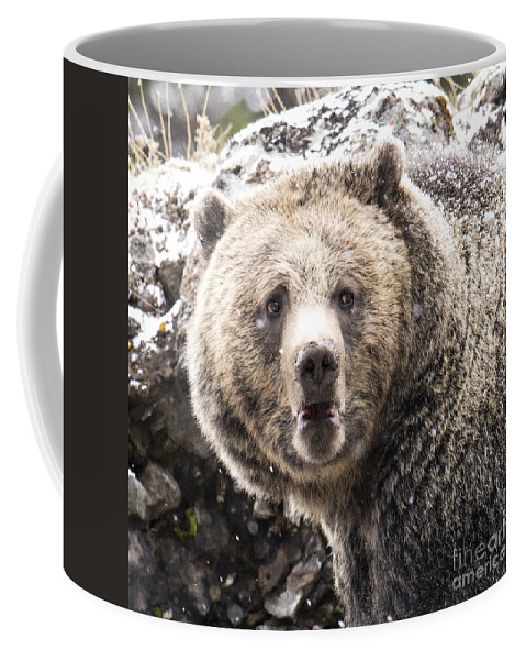 Grizzly Bear Coffee Mug featuring the photograph The Bathroom Bear by Deby Dixon