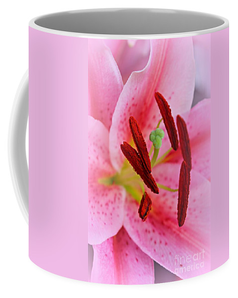 Stargazer Lily Coffee Mug featuring the photograph The Beauty Of A Stargazer by Clare Bevan