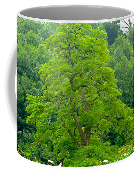 Tree Coffee Mug featuring the photograph The Beauty Of A Tree by Denise Mazzocco