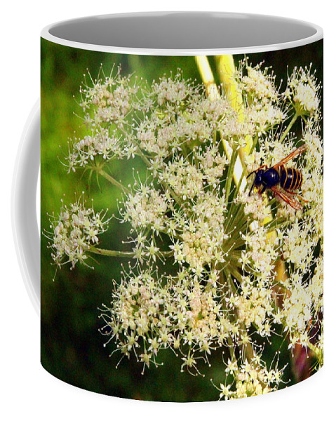 Flower Coffee Mug featuring the photograph The Bee And The Flowers At Troldhaugen by Laurel Talabere