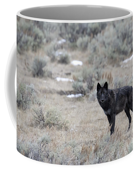 Black Wolf Coffee Mug featuring the photograph The Black Wolf by Deby Dixon
