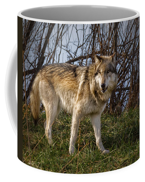 Animal Coffee Mug featuring the photograph The Boss by Jack R Perry