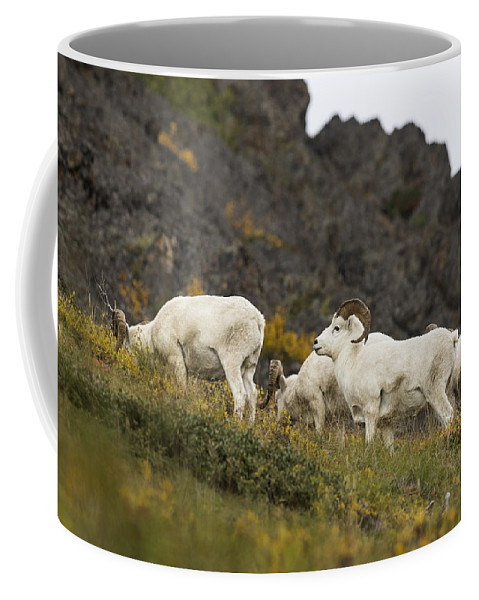 Ovis Dalli Coffee Mug featuring the photograph The Boys by Ted Raynor