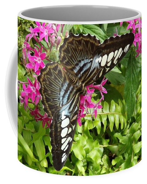 Butterfly Coffee Mug featuring the photograph The Brown Clipper by Lingfai Leung