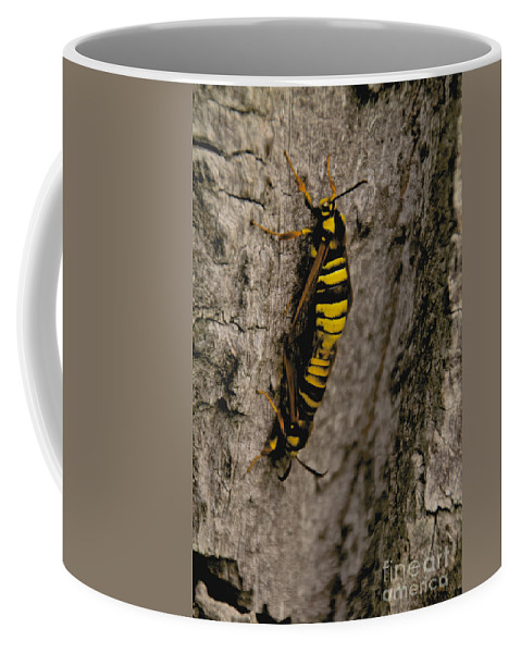 Tree Coffee Mug featuring the photograph The Bug by William Norton
