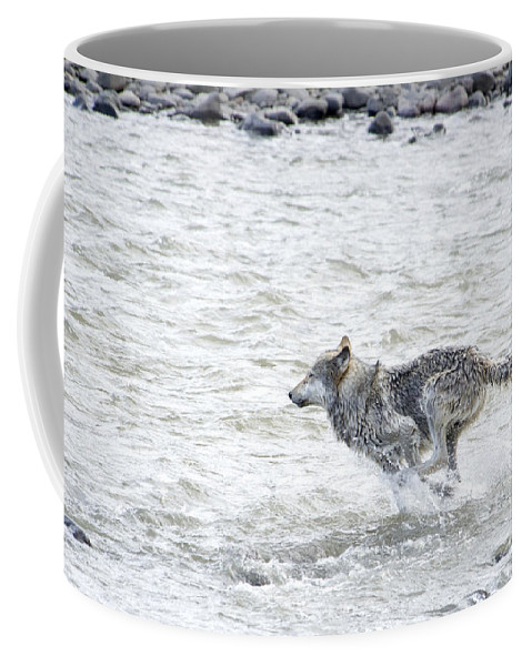 Gray Wolf Coffee Mug featuring the photograph The Chase by Deby Dixon