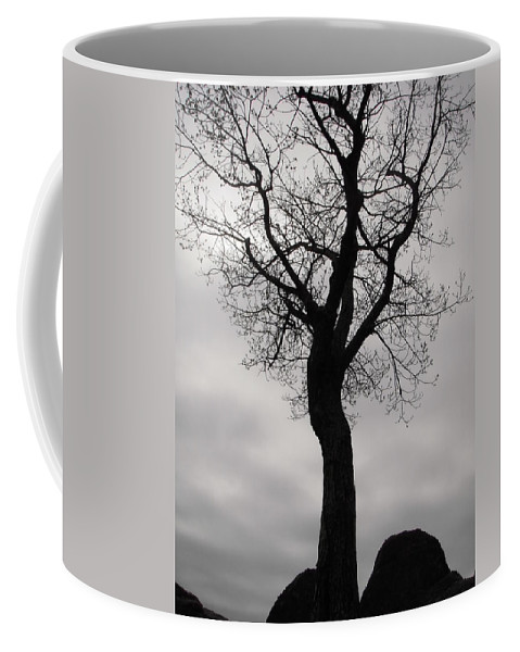 Tree Coffee Mug featuring the photograph The Chill Of Spring In The Shenandoah by Nicole Angell