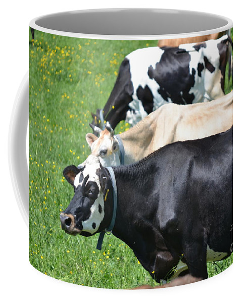 Vermont Coffee Mug featuring the photograph The Cows by Susan Russo