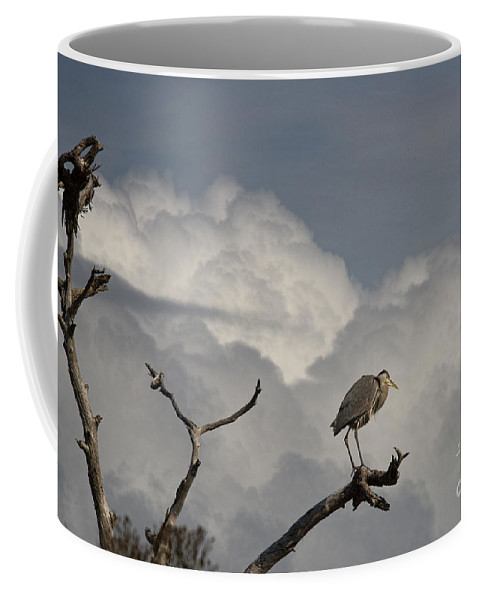 Crane Coffee Mug featuring the photograph The Crane The Clouds And The Dead Tree by David Arment