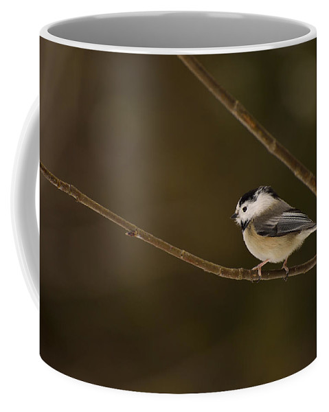Black-capped Chickadee Coffee Mug featuring the photograph The Cutest Songbird by Joshua McCullough