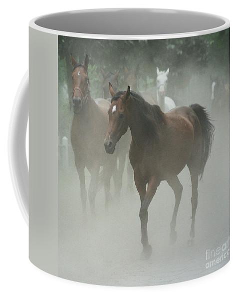 Arabian Horse Coffee Mug featuring the photograph The Daughters Of A Desert by Angel Ciesniarska