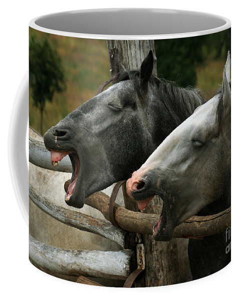 Horses Coffee Mug featuring the photograph the double Yawn by Angel Tarantella