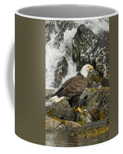 Eagle Coffee Mug featuring the photograph The Eagle by Ted Raynor
