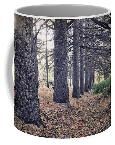 Woods Coffee Mug featuring the photograph The Forest Of A Thousand Stories by Guido Montanes Castillo