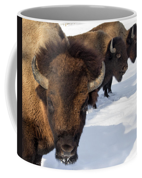 Bison Coffee Mug featuring the photograph The General And His Troups by Michael J Samuels