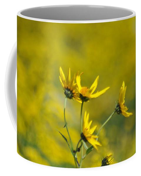 Wildflowers Coffee Mug featuring the photograph The Golden Wildflowers by Verana Stark