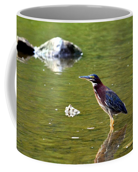 Green Heron Coffee Mug featuring the photograph The Green Heron by Maria Urso