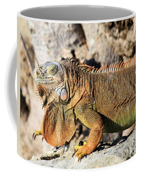 Iguana Coffee Mug featuring the photograph The Guardian by Adam Jewell