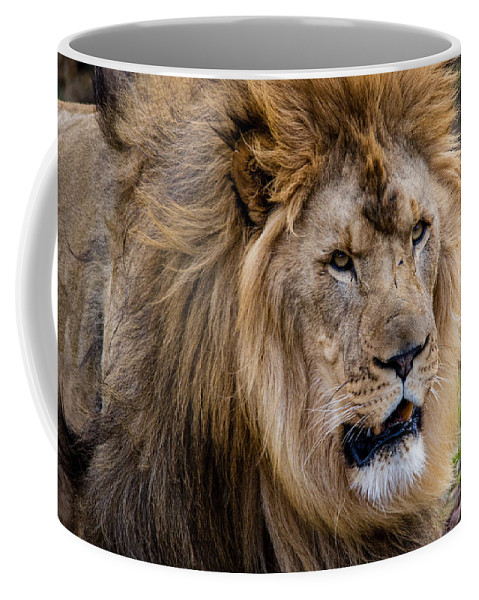 Lion Coffee Mug featuring the photograph The King by Mike Burgquist