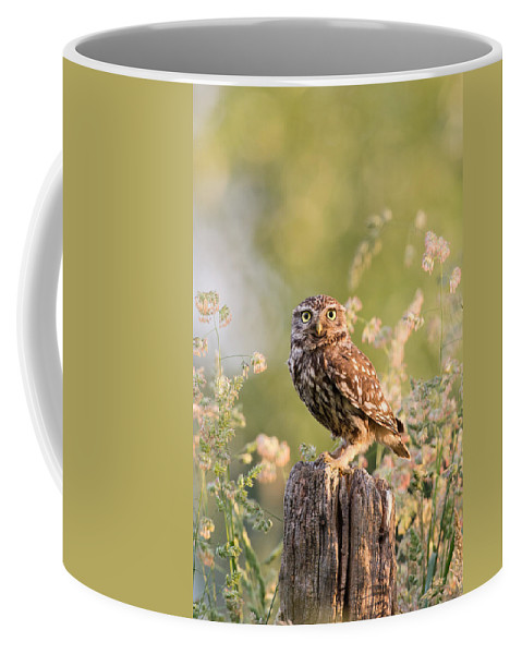 Adult Coffee Mug featuring the photograph The Little Owl by Roeselien Raimond
