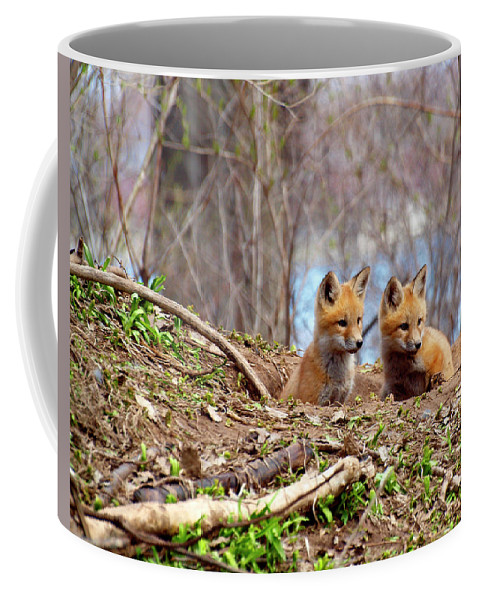 Red Foxes Coffee Mug featuring the photograph The Look by Thomas Young