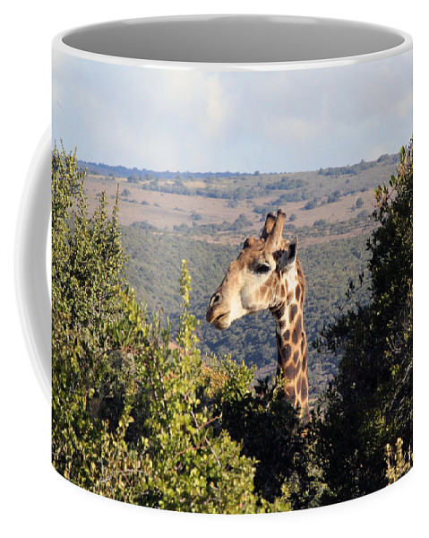 Giraffe Coffee Mug featuring the photograph The Lookout by Chris Whittle