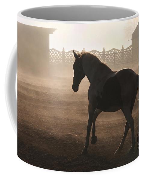 Horse Coffee Mug featuring the photograph The Morning Light by Angel Ciesniarska