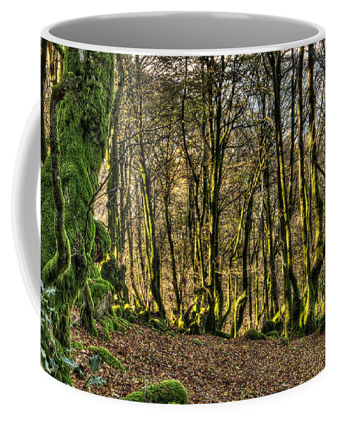 Forest Coffee Mug featuring the photograph The Mossy Creatures Of The Old Beech Forest 4 by Weston Westmoreland